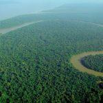 Regenwaldbild